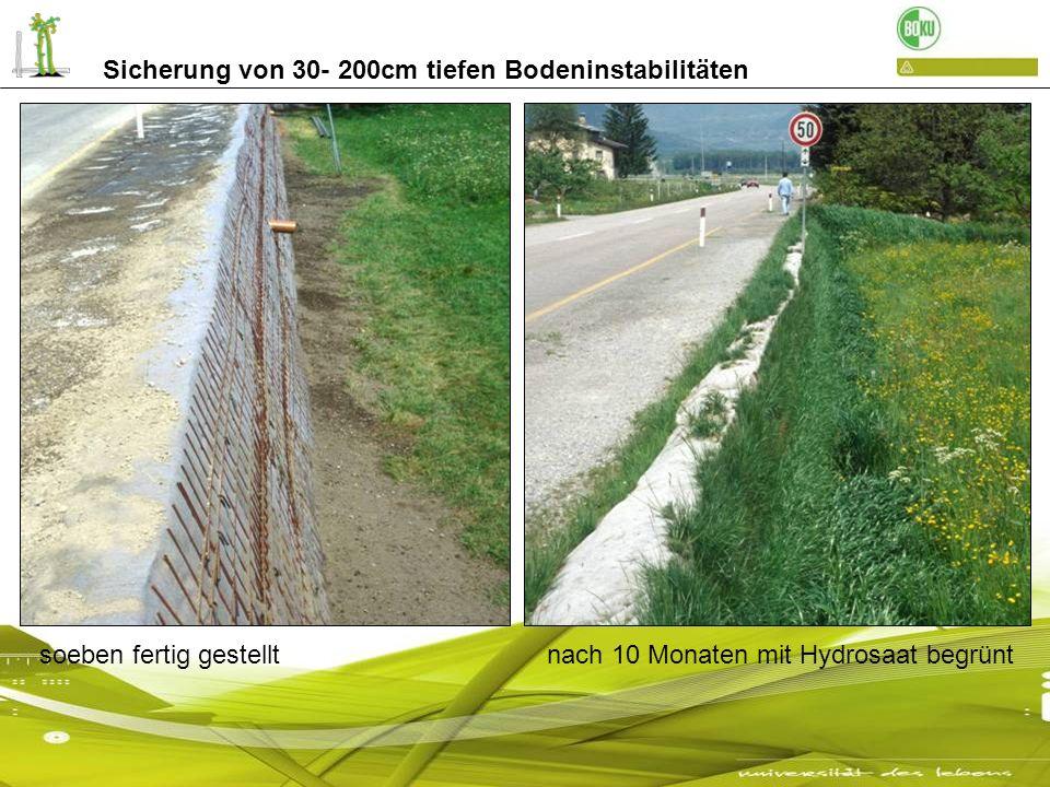Sicherung von 30- 200cm tiefen Bodeninstabilitäten soeben fertig gestellt nach 10 Monaten mit Hydrosaat begrünt
