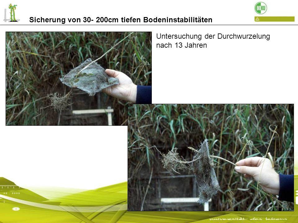 Sicherung von 30- 200cm tiefen Bodeninstabilitäten Durchwurzelung nach 13 Jahren