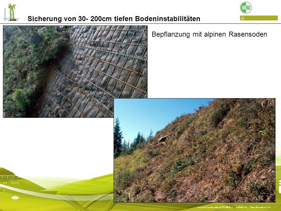 Sicherung von 30- 200cm tiefen Bodeninstabilitäten nach 1 Monat Fixierung der Rasensoden mit einem Drahtgitter