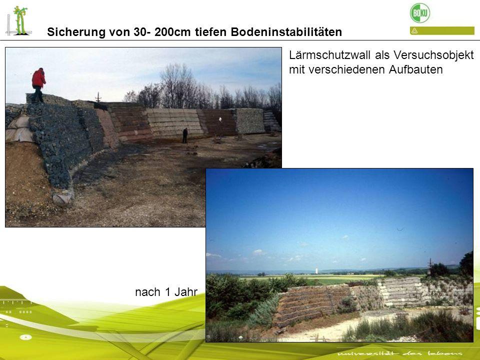 Sicherung von 30- 200cm tiefen Bodeninstabilitäten Lärmschutzwall als Versuchsobjekt mit verschiedenen Aufbauten nach 1 Jahr