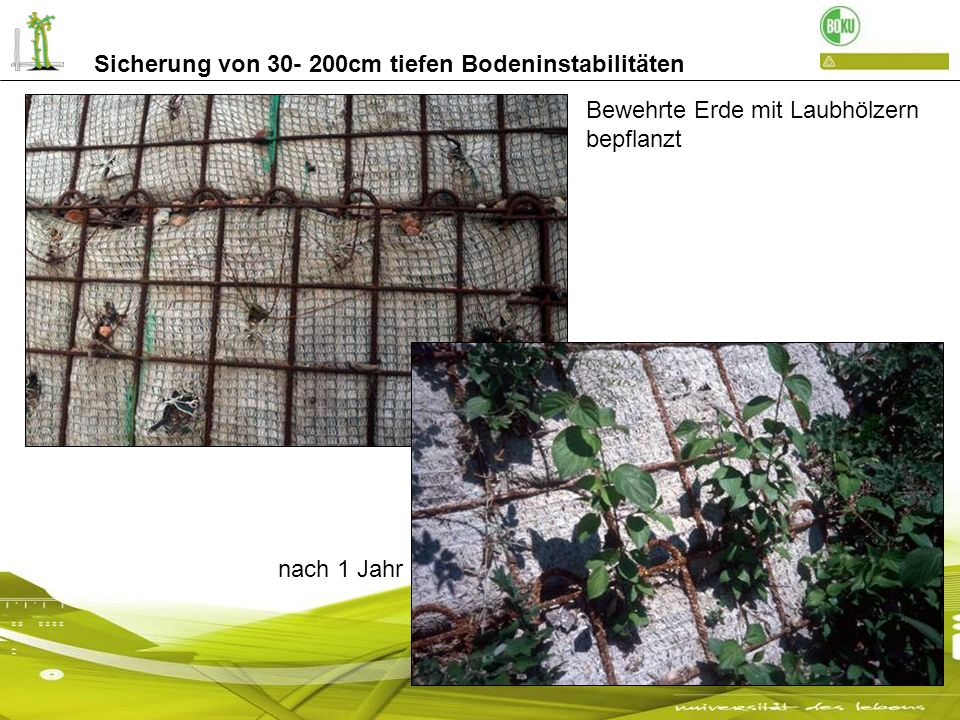 Sicherung von 30- 200cm tiefen Bodeninstabilitäten Maschendrahtumhüllte bewehrte Erde- mit Laubhölzern bepflanzt Stirnseite des Lärmschutzwalls: mit Buschlagen gesichert