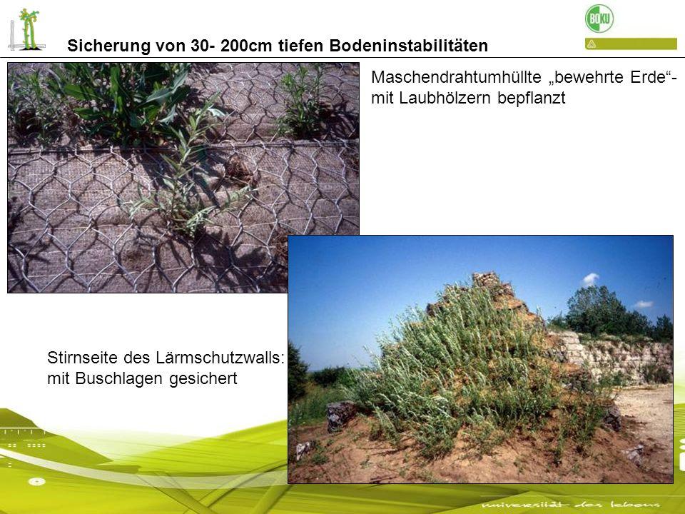 Sicherung von 30- 200cm tiefen Bodeninstabilitäten Maschendrahtumhüllte bewehrte Erde- mit Laubhölzern bepflanzt Stirnseite des Lärmschutzwalls: mit B