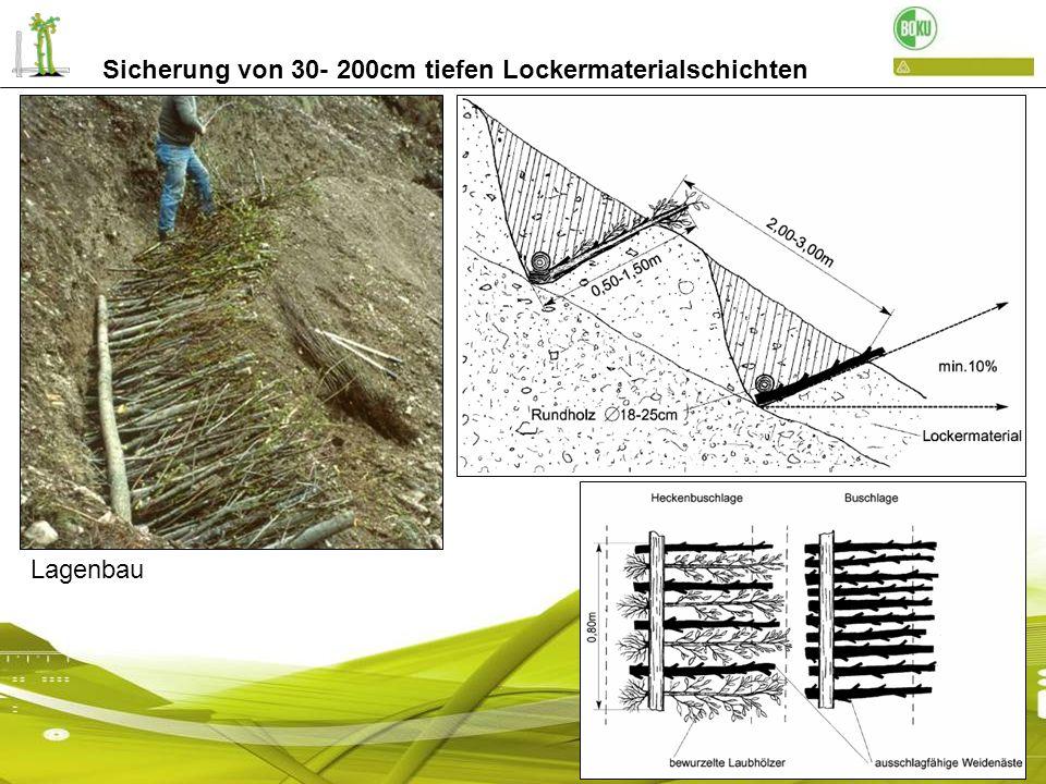 Sicherung von 30- 200cm tiefen Bodeninstabilitäten Sicherung des Lockermaterials mit Lagenbau Weg zur Prünsterlahn / Schenna nach 6 Monaten