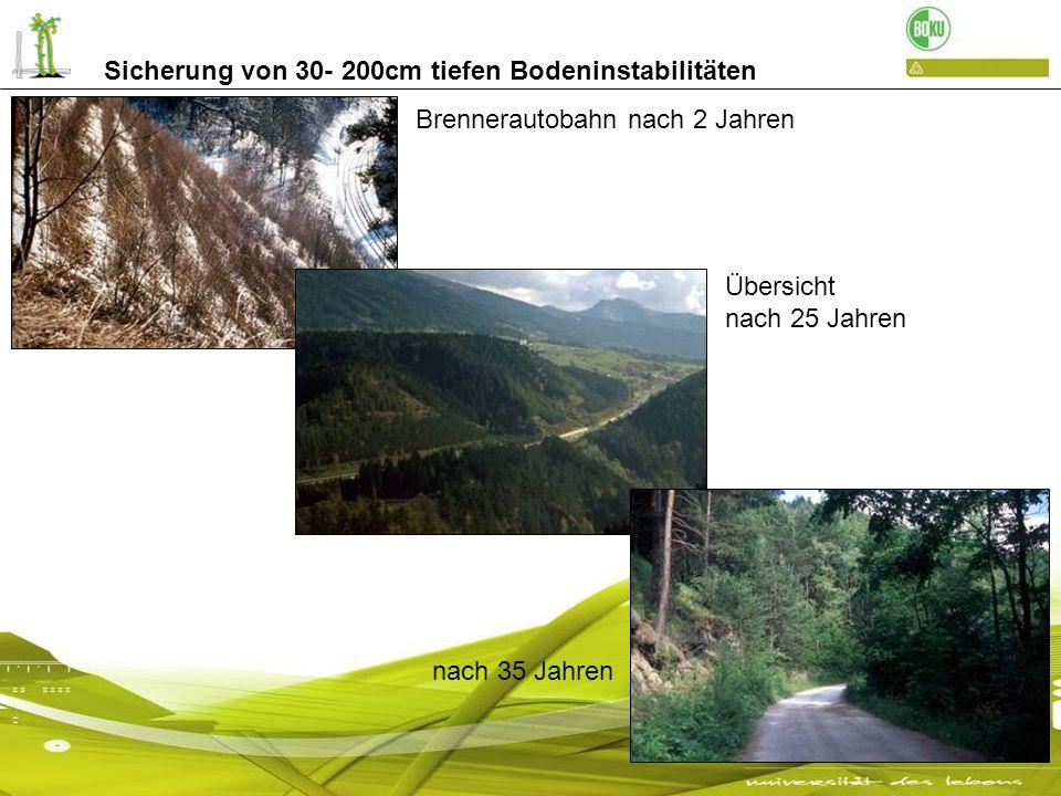 Sicherung von 30- 200cm tiefen Bodeninstabilitäten Brennerautobahn nach 2 Jahren Übersicht nach 25 Jahren nach 35 Jahren