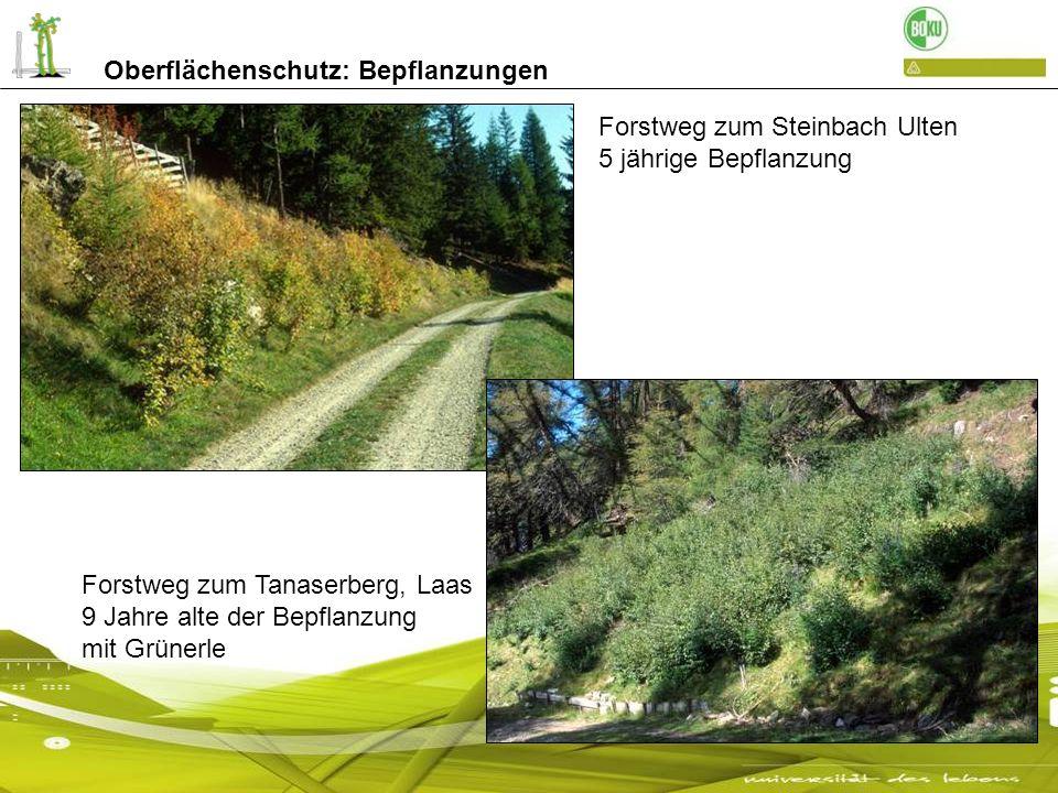 Oberflächenschutz: Bepflanzungen Forstweg zum Steinbach Ulten 5 jährige Bepflanzung Forstweg zum Tanaserberg, Laas 9 Jahre alte der Bepflanzung mit Gr