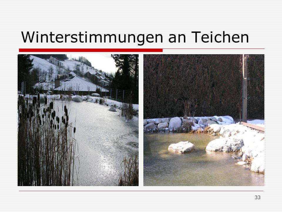 33 Winterstimmungen an Teichen