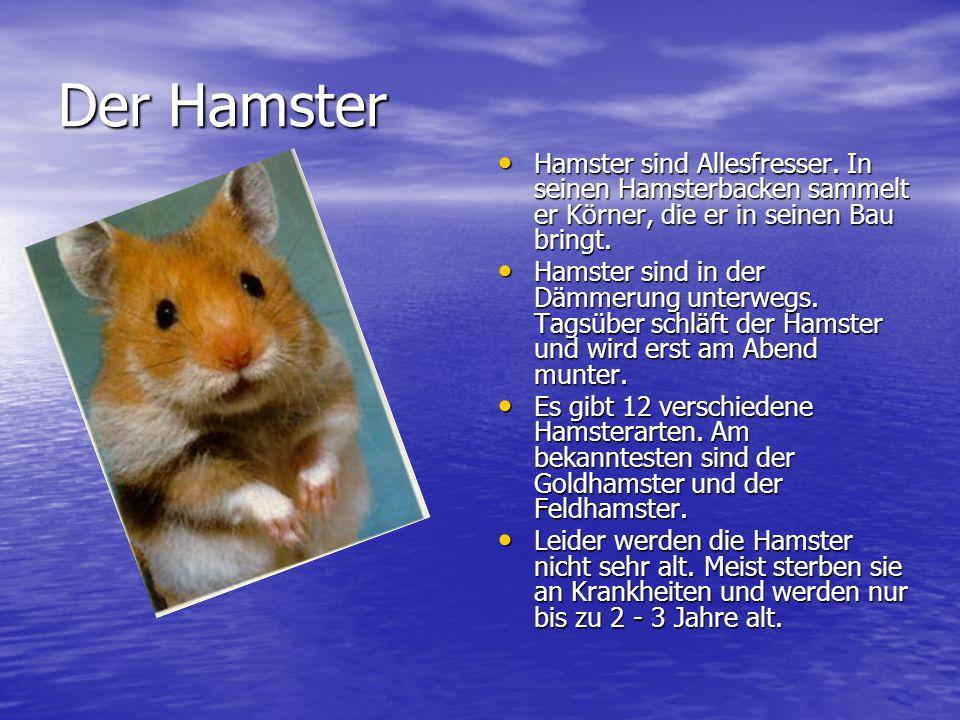 Der Hamster Hamster sind Allesfresser.