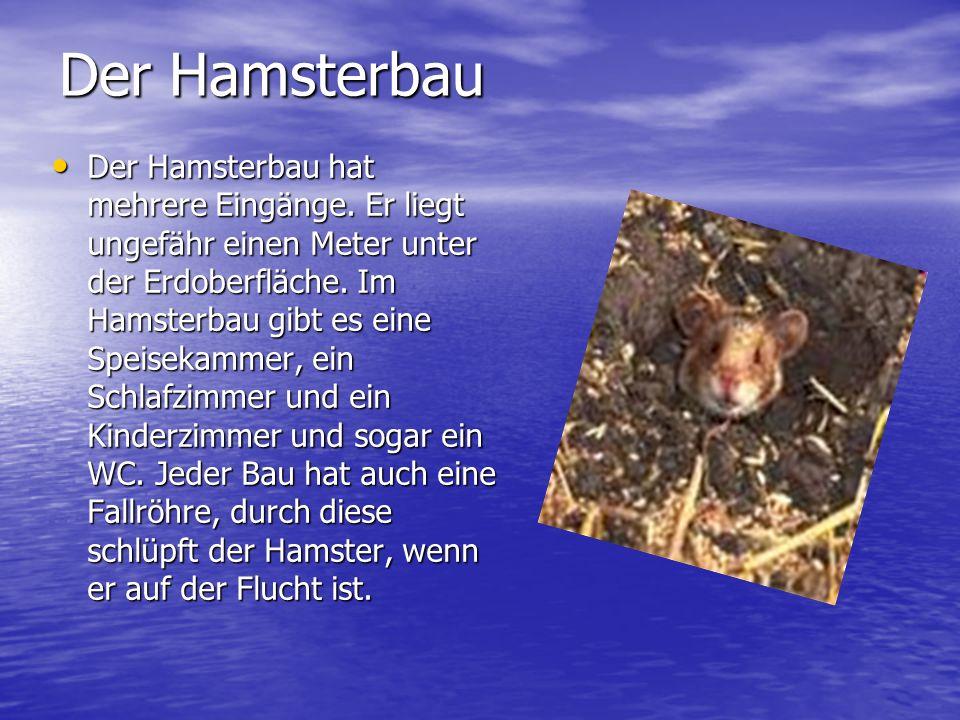 Der Hamsterbau Der Hamsterbau hat mehrere Eingänge.