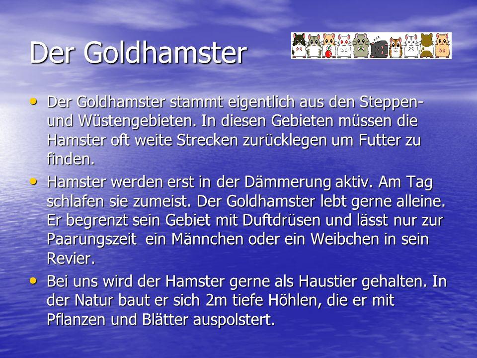 Der Goldhamster Der Goldhamster stammt eigentlich aus den Steppen- und Wüstengebieten.