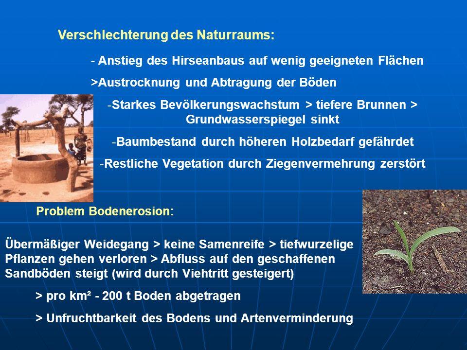 Lösungsalternativen: -Steigerung des Imports -Bevölkerungsminderung -Angepasste Landnutzungsformen Da die Bevölkerung wächst und die Handelsdefizite steigen, bleibt nur eine Anpassung der Landnutzung (Begünstigung des ländlichen Raumes) Mögliche Lösung des Problems: Anpflanzung der Acacia albida: - hat einen umgekehrten Vegetationszyklus - verliert in der Regenzeit die Blätter > Düngung des Ackerlandes - transportiert Mineralstoffe an die Oberfläche (zu den Kulturpflanzen) - in der Trockenzeit beschattet der Baum den Boden - liefert ab März Fruchtschoten (Futter fürs Vieh)