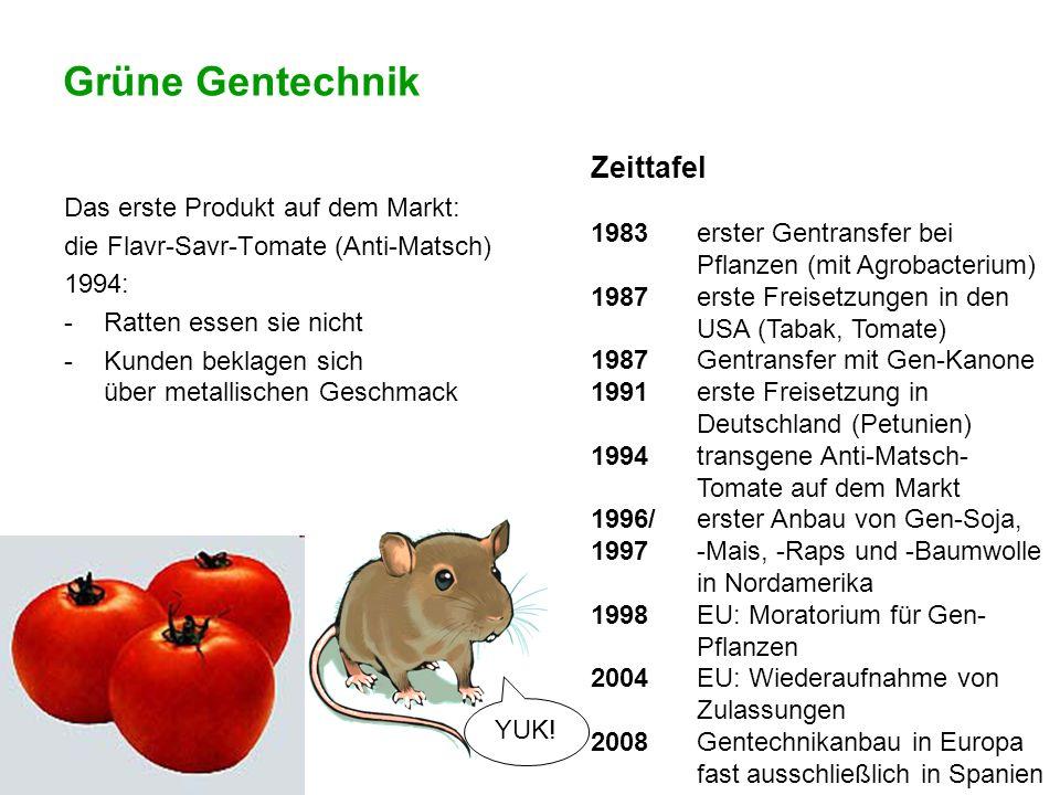 Grüne Gentechnik Das erste Produkt auf dem Markt: die Flavr-Savr-Tomate (Anti-Matsch) 1994: -Ratten essen sie nicht -Kunden beklagen sich über metalli