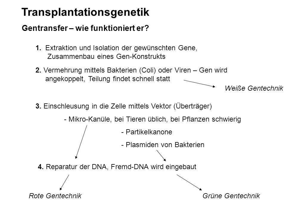 Transplantationsgenetik Gentransfer – wie funktioniert er? 1. Extraktion und Isolation der gewünschten Gene, Zusammenbau eines Gen-Konstrukts 2. Verme