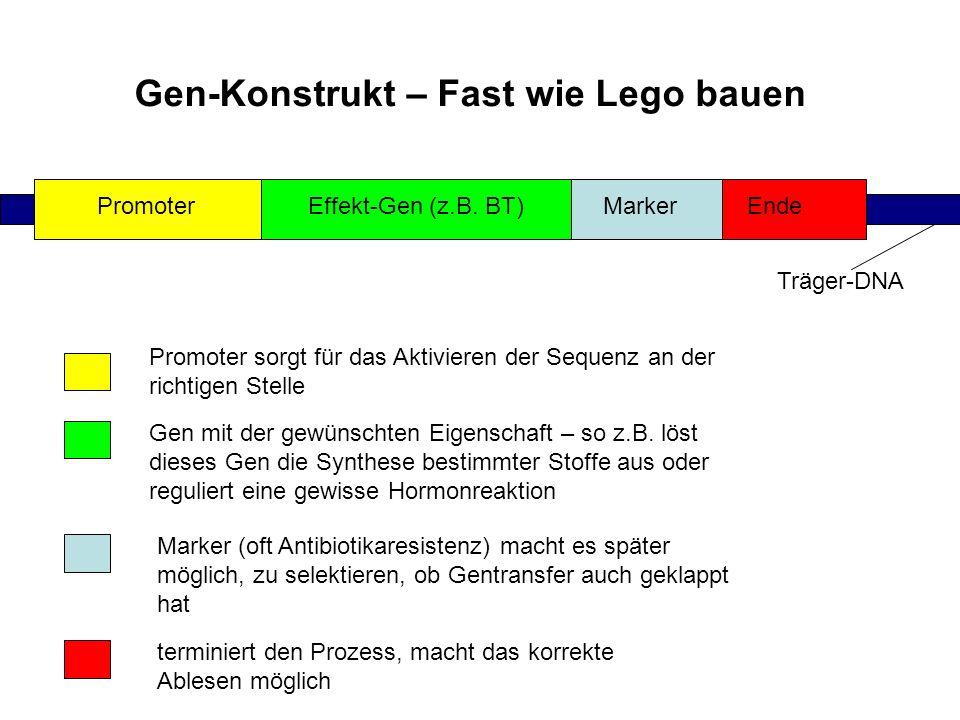 Gen-Konstrukt – Fast wie Lego bauen PromoterEffekt-Gen (z.B. BT)MarkerEnde Träger-DNA Promoter sorgt für das Aktivieren der Sequenz an der richtigen S