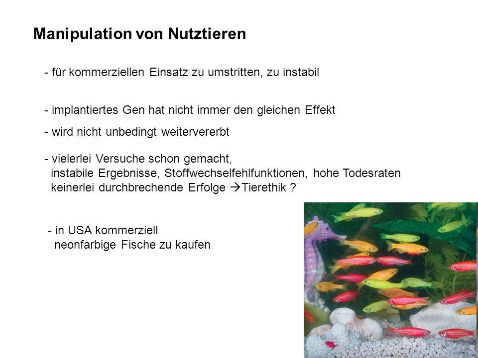 Manipulation von Nutztieren - für kommerziellen Einsatz zu umstritten, zu instabil - implantiertes Gen hat nicht immer den gleichen Effekt - wird nich
