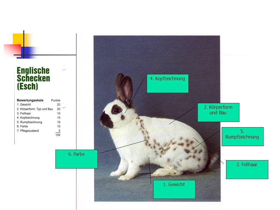 5. Rumpfzeichnung 3. Fellhaar 1. Gewicht 4. Kopfzeichnung 2. Körperform und Bau 6. Farbe