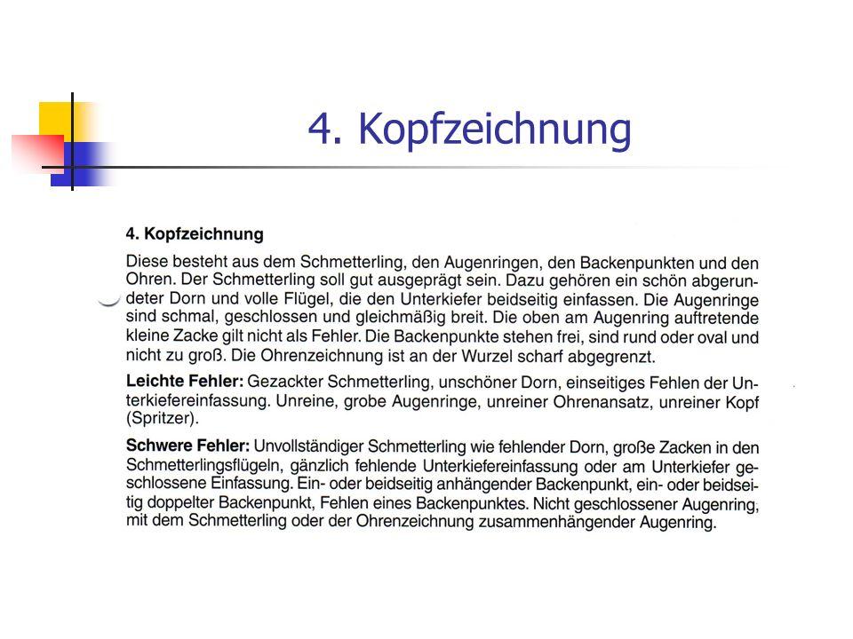 5. Rumpfzeichnung