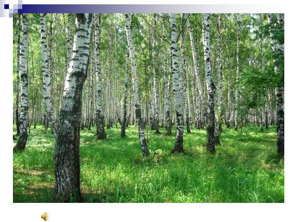 Im unserem Walder gibt es 39 Tiere und 237 Arten Vogel.