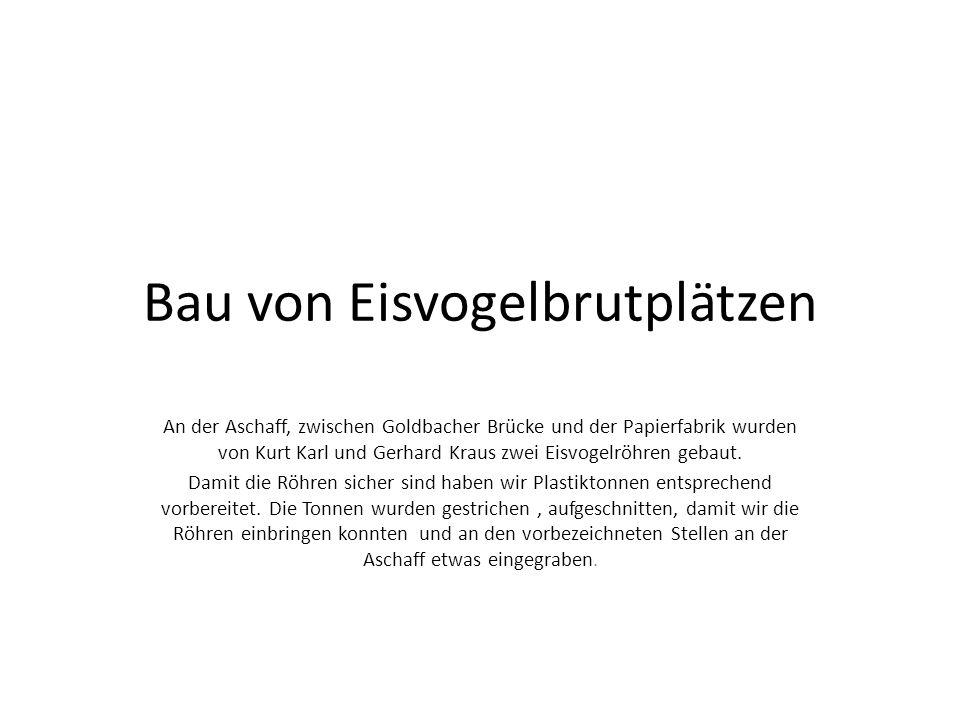 Bau von Eisvogelbrutplätzen An der Aschaff, zwischen Goldbacher Brücke und der Papierfabrik wurden von Kurt Karl und Gerhard Kraus zwei Eisvogelröhren