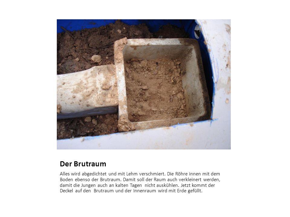Der Brutraum Alles wird abgedichtet und mit Lehm verschmiert. Die Röhre innen mit dem Boden ebenso der Brutraum. Damit soll der Raum auch verkleinert