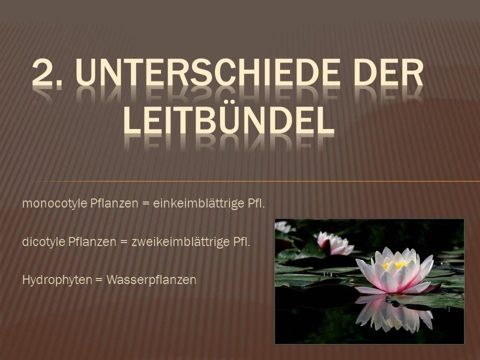 monocotyle Pflanzen = einkeimblättrige Pfl. dicotyle Pflanzen = zweikeimblättrige Pfl. Hydrophyten = Wasserpflanzen