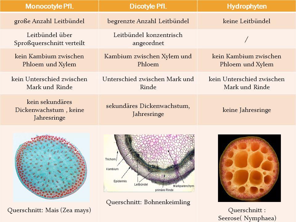 Monocotyle Pfl.Dicotyle Pfl.Hydrophyten große Anzahl Leitbündelbegrenzte Anzahl Leitbündelkeine Leitbündel Leitbündel über Sproßquerschnitt verteilt L