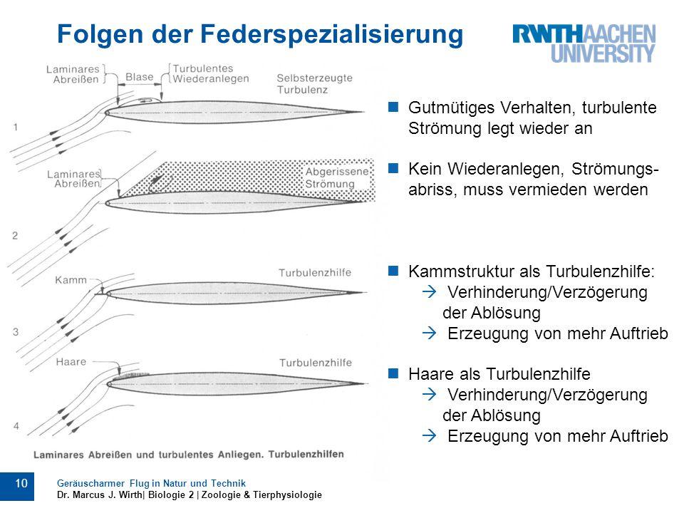 Folgen der Federspezialisierung Geräuscharmer Flug in Natur und Technik Dr. Marcus J. Wirth| Biologie 2 | Zoologie & Tierphysiologie 10 Gutmütiges Ver