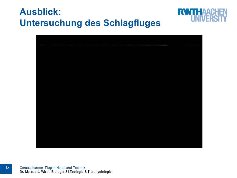 Ausblick: Untersuchung des Schlagfluges Geräuscharmer Flug in Natur und Technik Dr. Marcus J. Wirth| Biologie 2 | Zoologie & Tierphysiologie 13