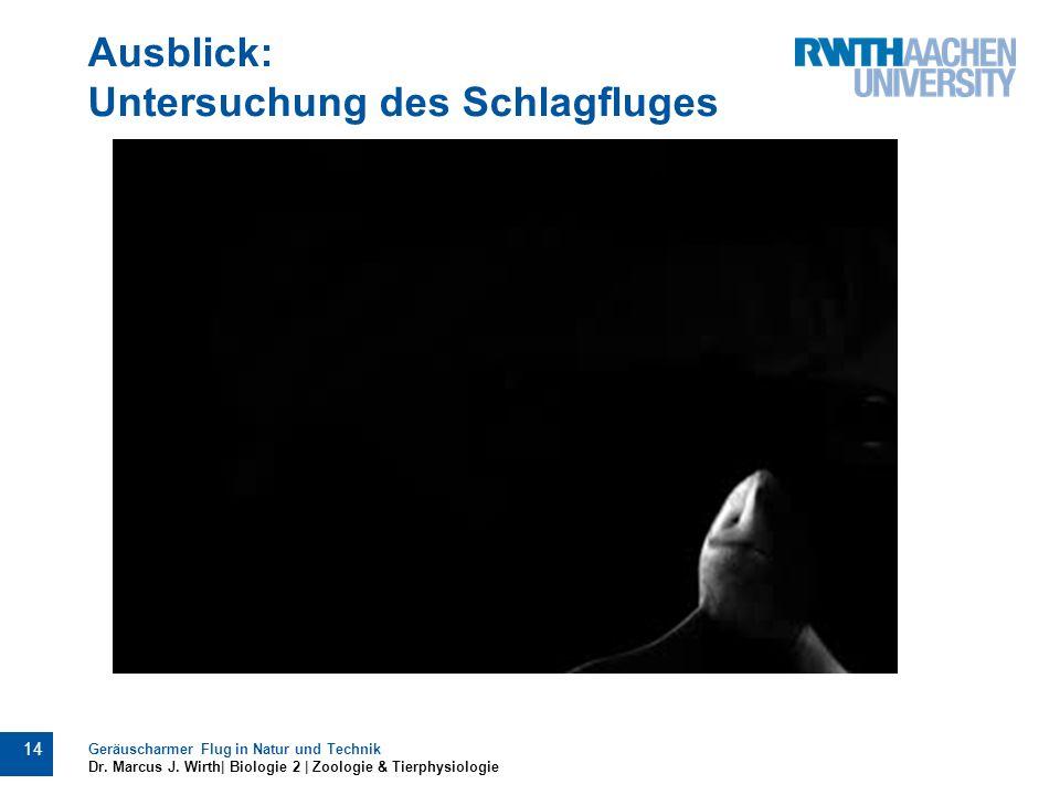 Ausblick: Untersuchung des Schlagfluges Geräuscharmer Flug in Natur und Technik Dr. Marcus J. Wirth| Biologie 2 | Zoologie & Tierphysiologie 14