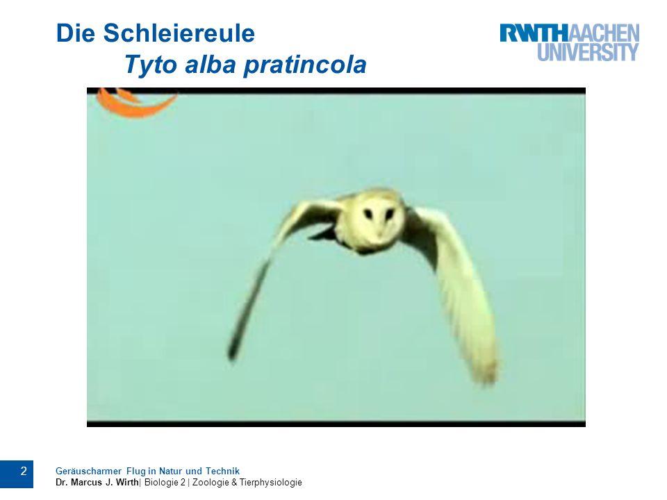2 Geräuscharmer Flug in Natur und Technik Dr. Marcus J. Wirth| Biologie 2 | Zoologie & Tierphysiologie Die Schleiereule Tyto alba pratincola