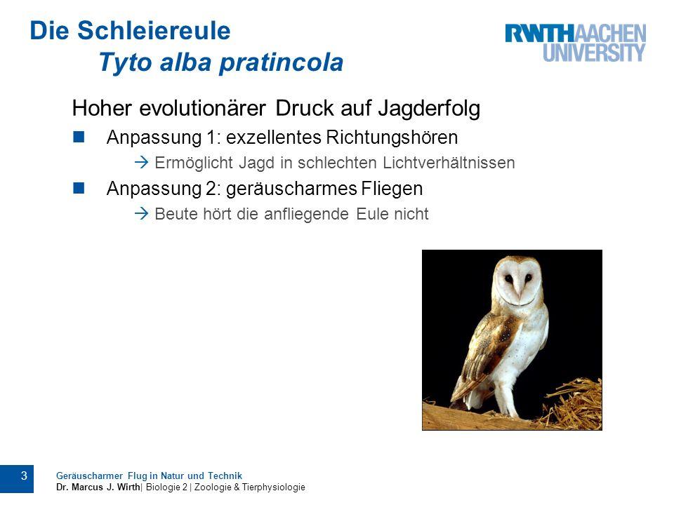 Geräuscharmer Flug in Natur und Technik Dr. Marcus J. Wirth| Biologie 2 | Zoologie & Tierphysiologie 3 Hoher evolutionärer Druck auf Jagderfolg Anpass