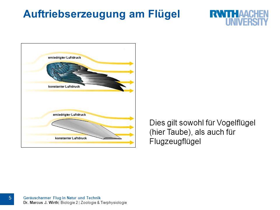 Auftriebserzeugung am Flügel Geräuscharmer Flug in Natur und Technik Dr. Marcus J. Wirth| Biologie 2 | Zoologie & Tierphysiologie 5 Dies gilt sowohl f