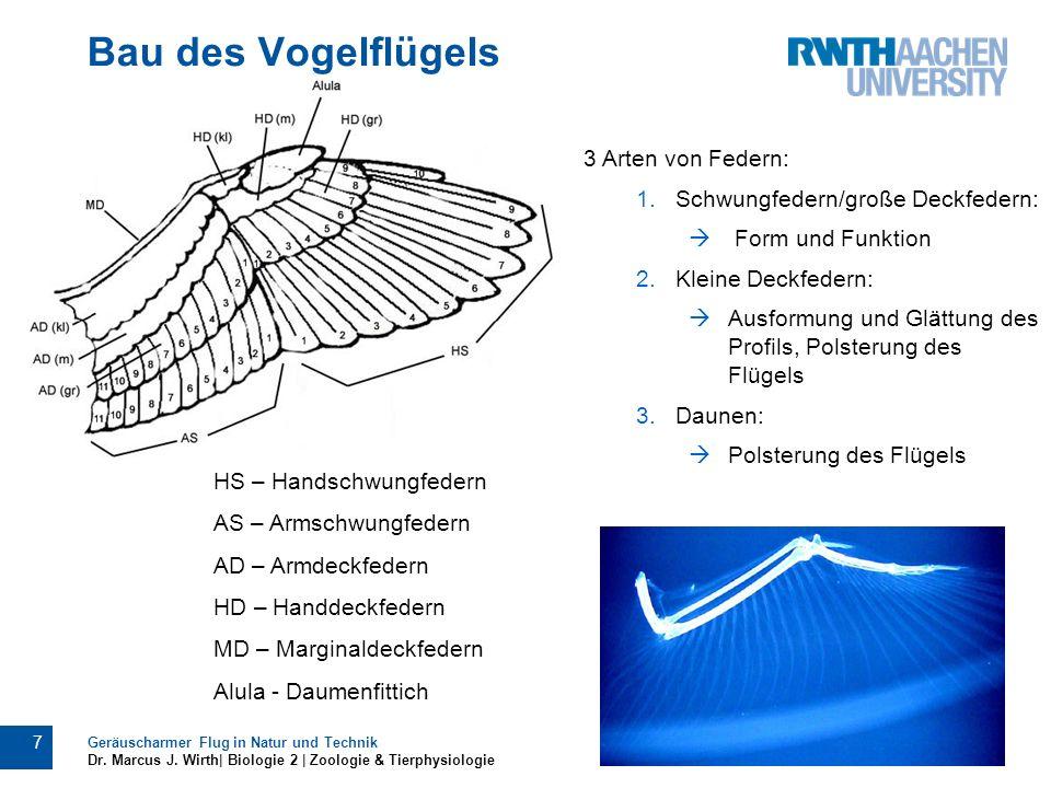 Bau des Vogelflügels Geräuscharmer Flug in Natur und Technik Dr. Marcus J. Wirth| Biologie 2 | Zoologie & Tierphysiologie 7 3 Arten von Federn: 1.Schw