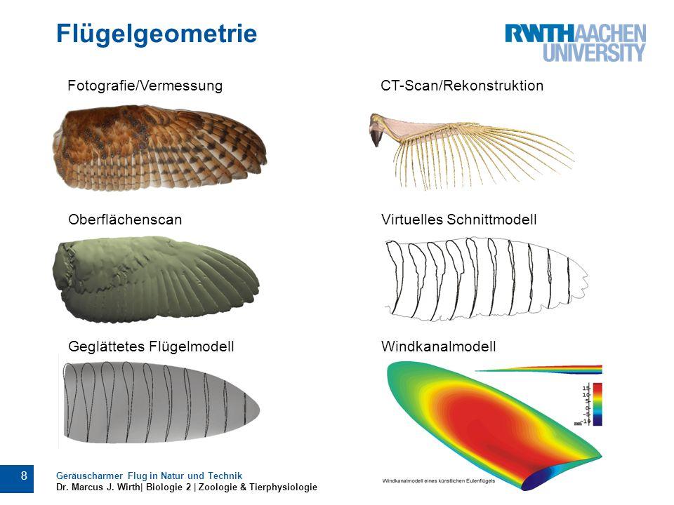 Flügelgeometrie Geräuscharmer Flug in Natur und Technik Dr. Marcus J. Wirth| Biologie 2 | Zoologie & Tierphysiologie 8 Fotografie/VermessungCT-Scan/Re
