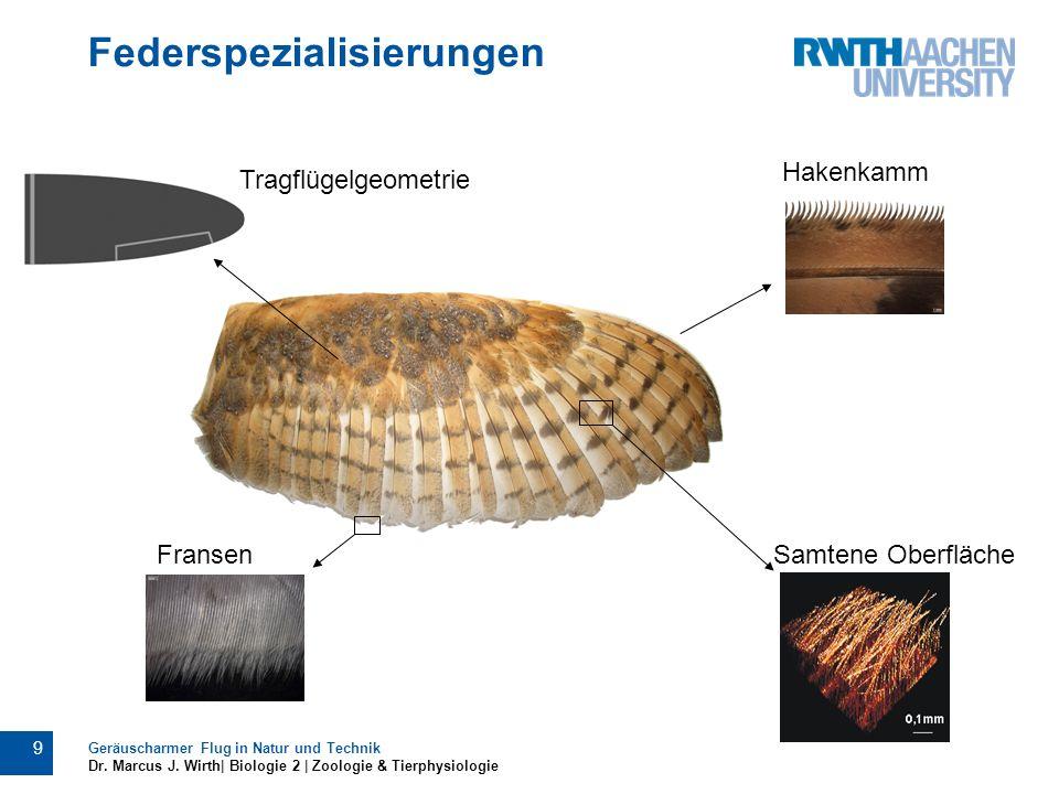 Federspezialisierungen Geräuscharmer Flug in Natur und Technik Dr. Marcus J. Wirth| Biologie 2 | Zoologie & Tierphysiologie 9 Tragflügelgeometrie Hake