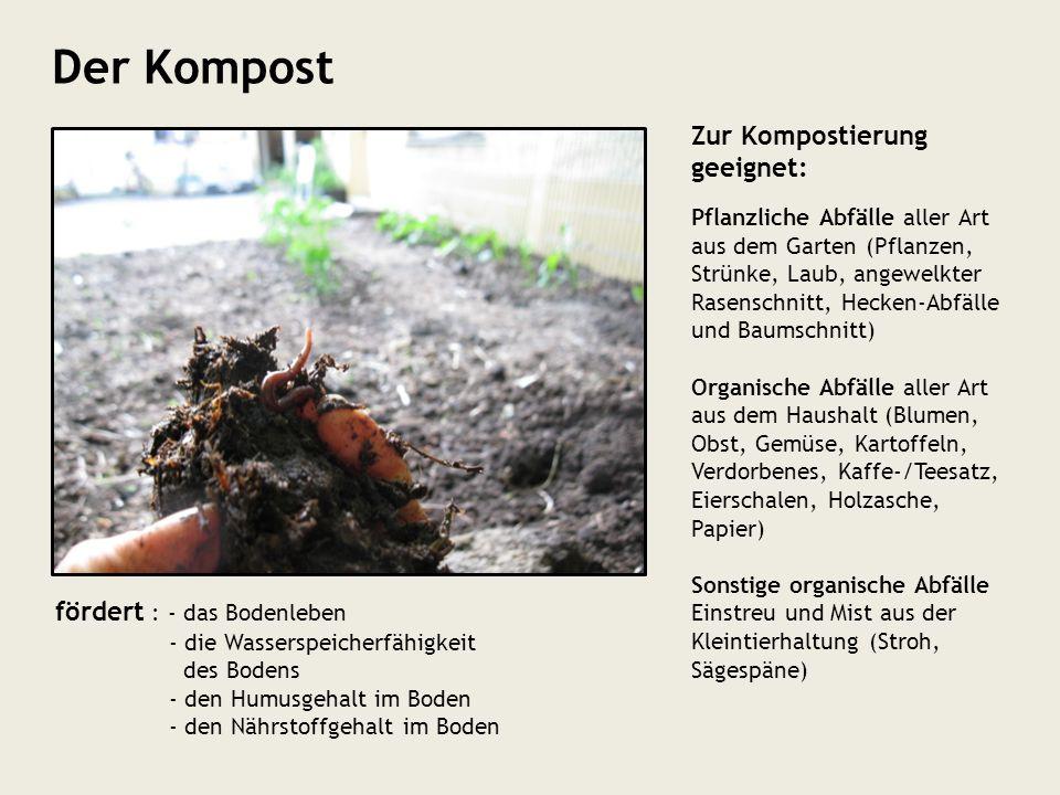 fördert : - das Bodenleben - die Wasserspeicherfähigkeit des Bodens - den Humusgehalt im Boden - den Nährstoffgehalt im Boden Der Kompost Zur Komposti