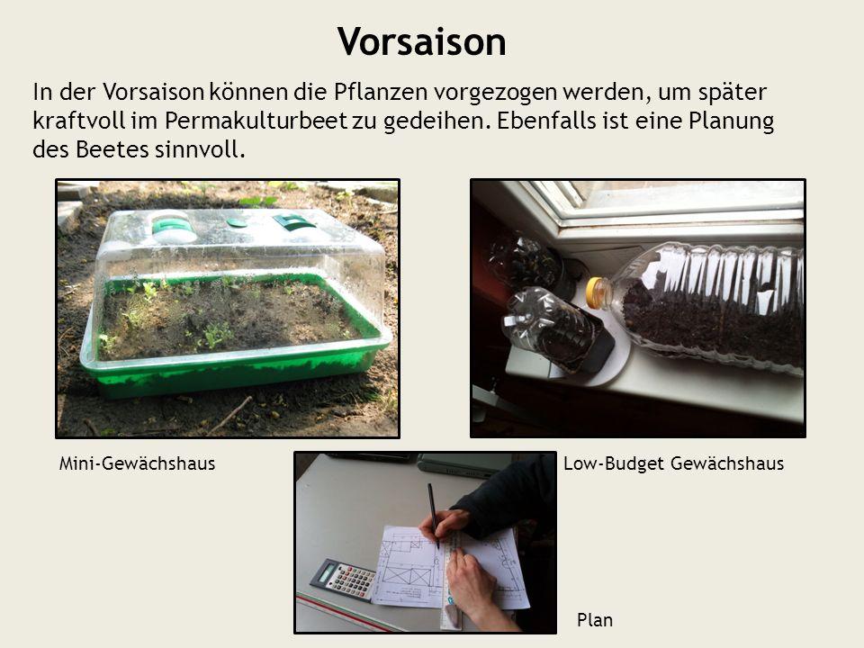 Vorsaison Mini-GewächshausLow-Budget Gewächshaus In der Vorsaison können die Pflanzen vorgezogen werden, um später kraftvoll im Permakulturbeet zu ged