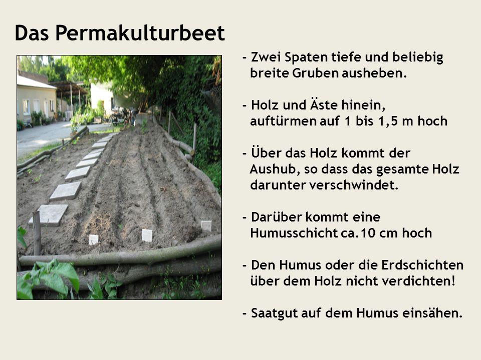 Das Permakulturbeet - Zwei Spaten tiefe und beliebig breite Gruben ausheben. - Holz und Äste hinein, auftürmen auf 1 bis 1,5 m hoch - Über das Holz ko