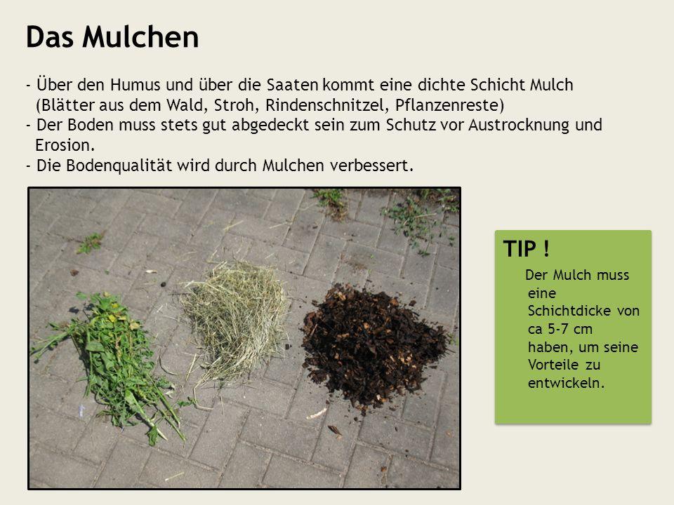 Das Mulchen - Über den Humus und über die Saaten kommt eine dichte Schicht Mulch (Blätter aus dem Wald, Stroh, Rindenschnitzel, Pflanzenreste) - Der B