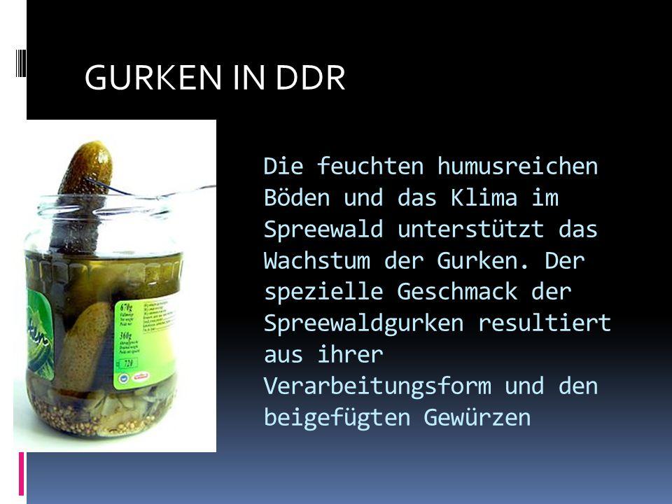 Die feuchten humusreichen Böden und das Klima im Spreewald unterstützt das Wachstum der Gurken.
