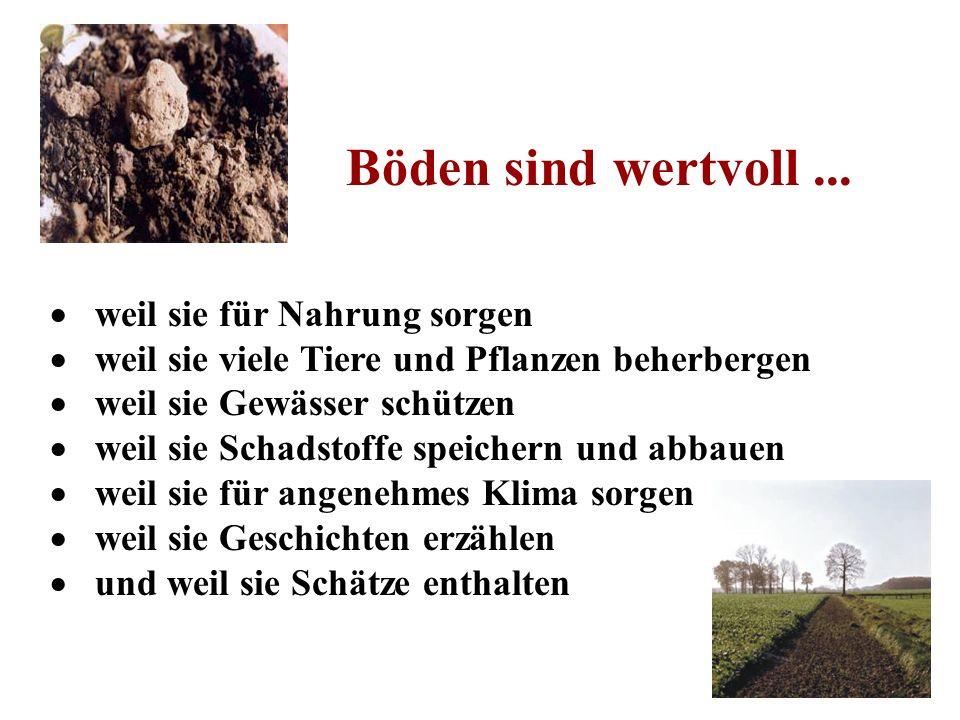 Böden sind wertvoll... weil sie für Nahrung sorgen weil sie viele Tiere und Pflanzen beherbergen weil sie Gewässer schützen weil sie Schadstoffe speic