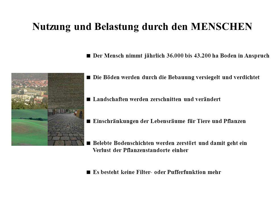 Nutzung und Belastung durch den MENSCHEN Der Mensch nimmt jährlich 36.000 bis 43.200 ha Boden in Anspruch Die Böden werden durch die Bebauung versiege