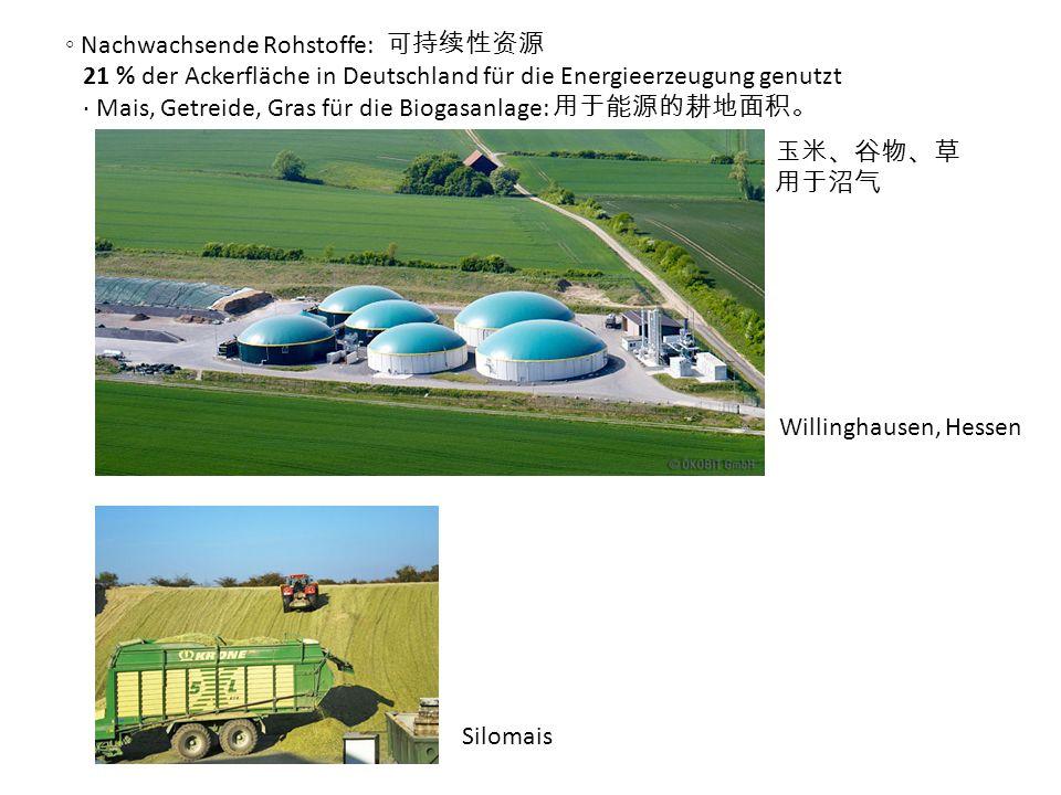 Nachwachsende Rohstoffe: 21 % der Ackerfläche in Deutschland für die Energieerzeugung genutzt Mais, Getreide, Gras für die Biogasanlage: Willinghausen