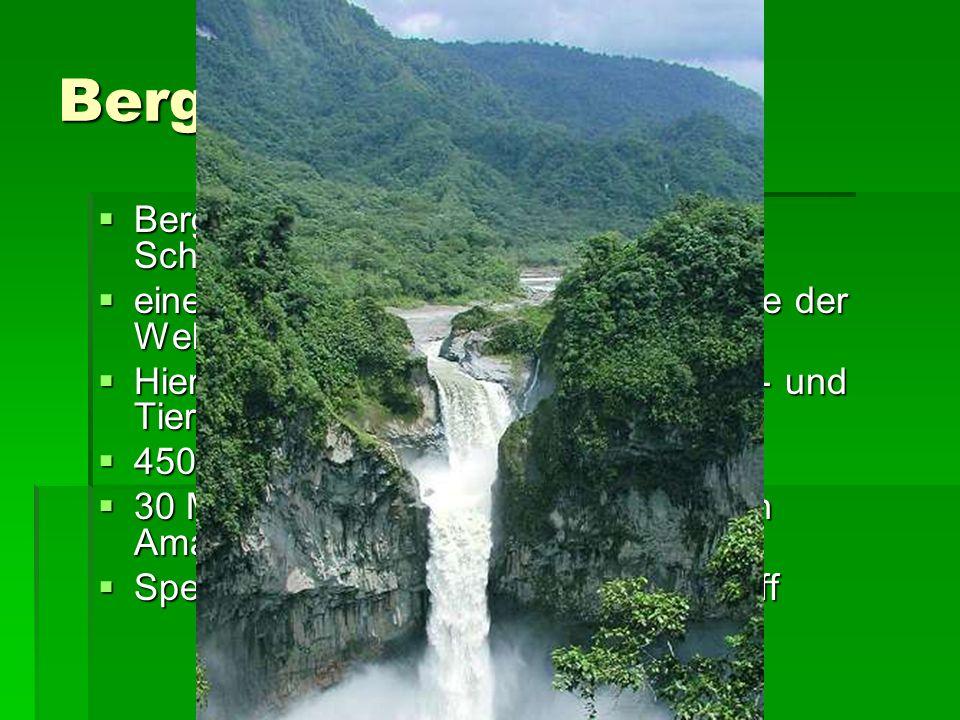 Bergnebelwald Bergnebelwald des Mindo-Nambillo- Schutzgebietes in Ecuador Bergnebelwald des Mindo-Nambillo- Schutzgebietes in Ecuador eines der 5 artenreichsten Waldgebiete der Welt eines der 5 artenreichsten Waldgebiete der Welt Hier leben unzählige seltene Pflanzen- und Tierarten Hier leben unzählige seltene Pflanzen- und Tierarten 450 Vogelarten 450 Vogelarten 30 Millionen Tier- und Pflanzenarten in Amazonien 30 Millionen Tier- und Pflanzenarten in Amazonien Speichert jährlich 120 Mio t Kohlenstoff Speichert jährlich 120 Mio t Kohlenstoff