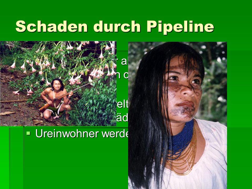 Schaden durch Pipeline Aus Lecks in der alten SOTE-Pipeline sind in 30 Jahren ca. 74 Mio. l Öl ausgetreten Aus Lecks in der alten SOTE-Pipeline sind i