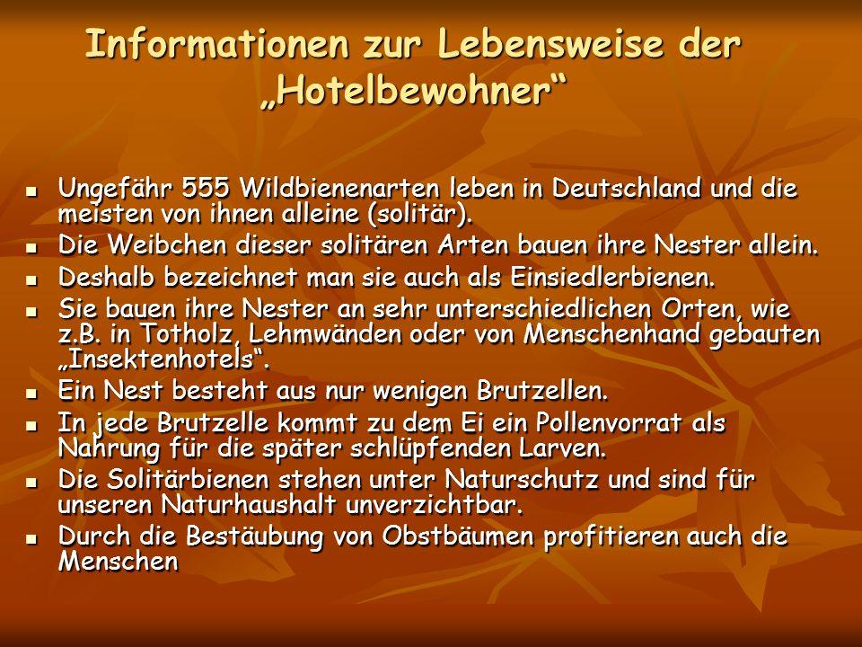 Informationen zur Lebensweise der Hotelbewohner Ungefähr 555 Wildbienenarten leben in Deutschland und die meisten von ihnen alleine (solitär). Ungefäh