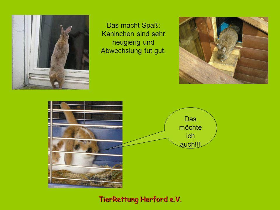 Das macht Spaß: Kaninchen sind sehr neugierig und Abwechslung tut gut. TierRettung Herford e.V. Das möchte ich auch!!!
