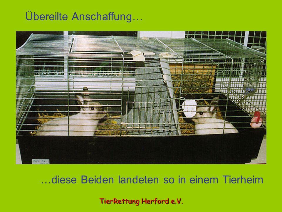 Übereilte Anschaffung… …diese Beiden landeten so in einem Tierheim