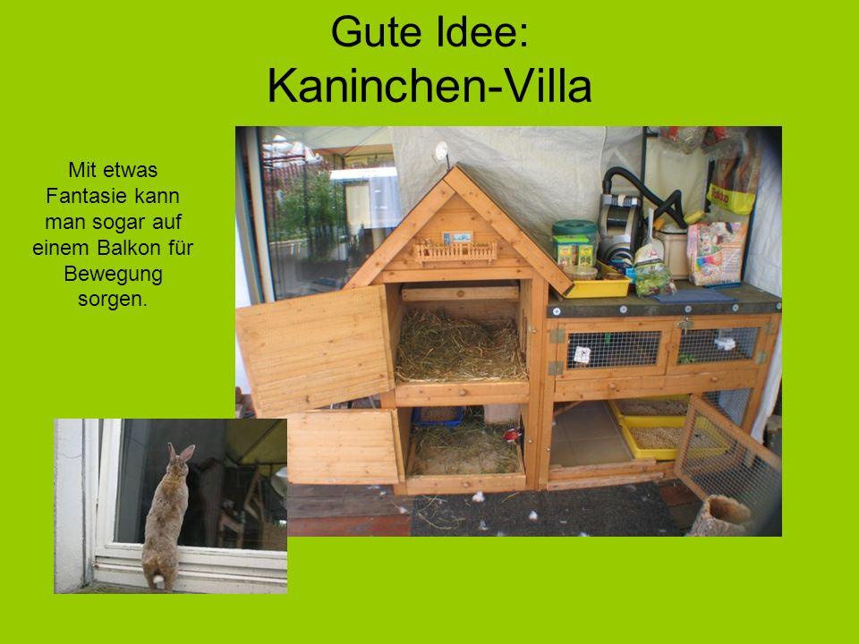 Gute Idee: Kaninchen-Villa Mit etwas Fantasie kann man sogar auf einem Balkon für Bewegung sorgen.