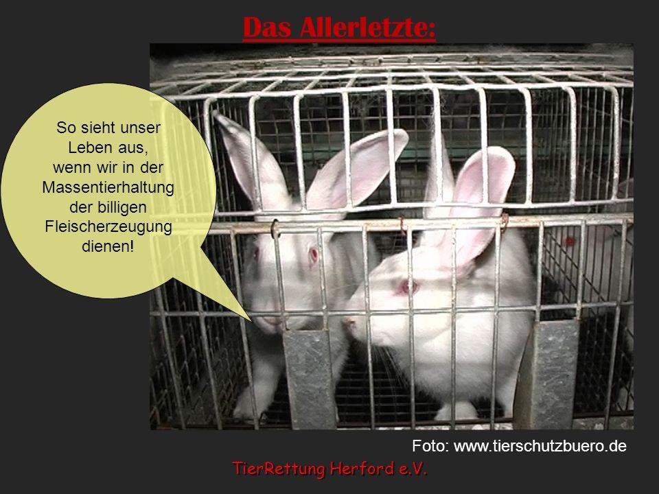 Das Allerletzte: So sieht unser Leben aus, wenn wir in der Massentierhaltung der billigen Fleischerzeugung dienen! Foto: www.tierschutzbuero.de