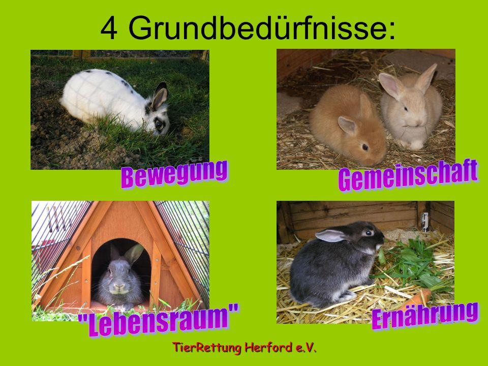 4 Grundbedürfnisse: TierRettung Herford e.V.